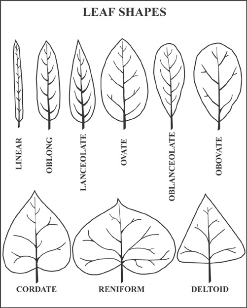 knp rare plants database  glossary